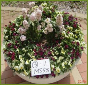 ミネラルスターの花類に対する効果事例