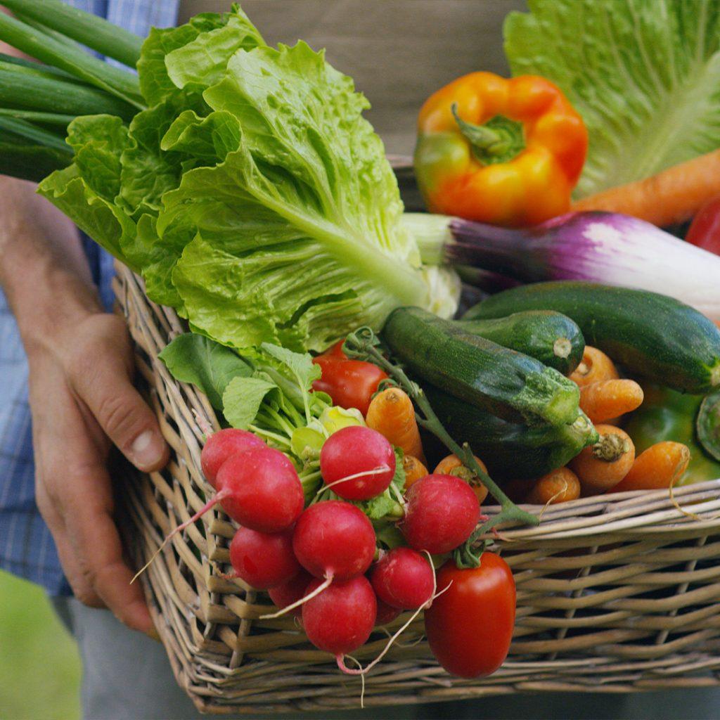 ミネラルスターの野菜に対する効果事例
